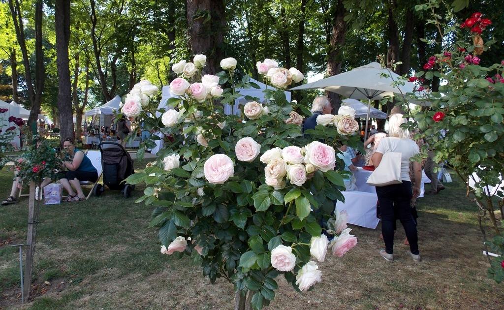 bad-sauerbrunn-rosarium