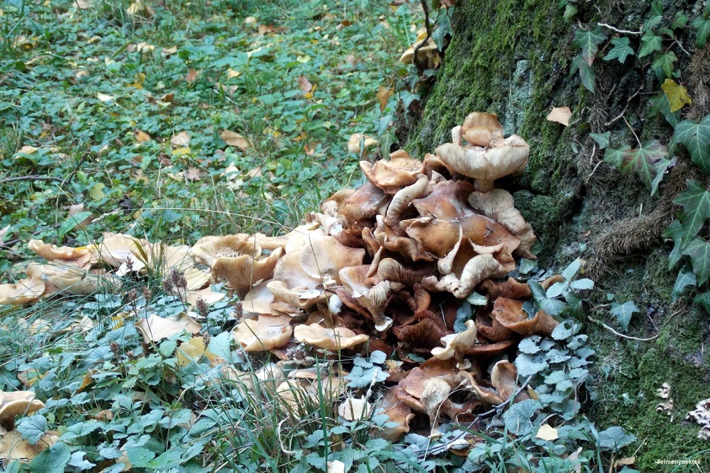 sopron-loverek-parkerdo-szivszanatorum