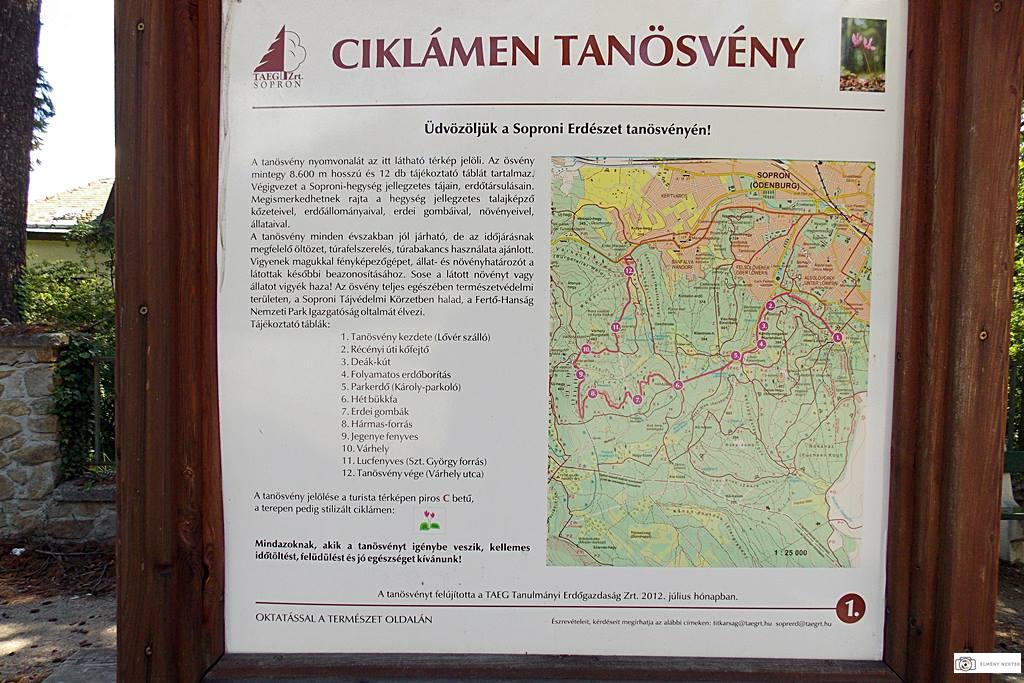 ciklamen-tanosveny-sopron