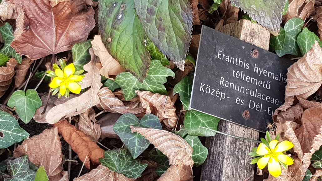 botanikus-kert-sopron-teltemeto