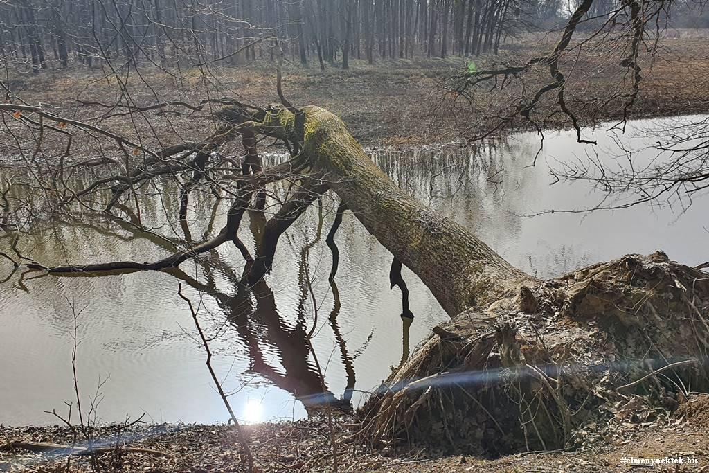 dobogo-erdo-tanosveny