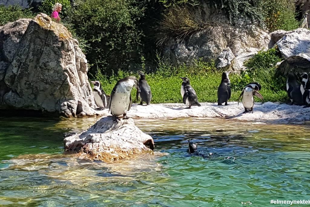 schönbrunn-állatkert